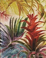 Tropic Botanicals VI