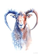 Copper and Blue Ram