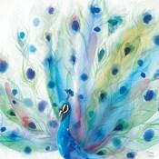 Peacock Glory V