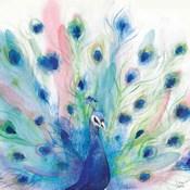 Peacock Glory IV