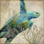 Sea Turtle Atlantic