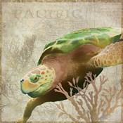 Sea Turtle Pacific
