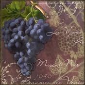 Blue Vines Black Muscat
