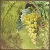White Vines Muscat