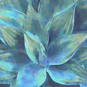Agave Forms III