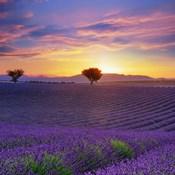 Lavender Sky Sunset