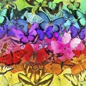 Rainbow of Butterflies