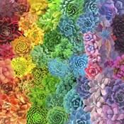 Rainbow Succulents II