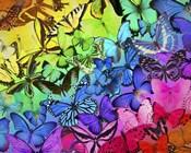 Rainbow of Butterflies 2