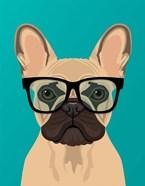 French Bulldog Teal