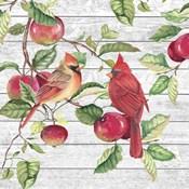 Fall Cardinals A