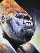 Gorilla - Silverback