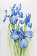 Stems of Blue Iris