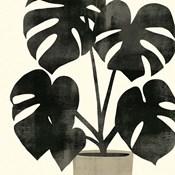 Plantling II