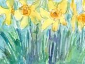 Daffodil Blooms I