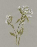 White Field Flowers III