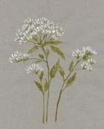 White Field Flowers IV