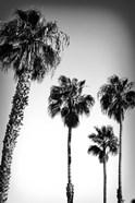 Beach Air I