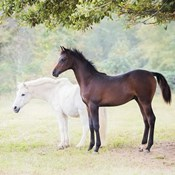 Collection of Horses VII