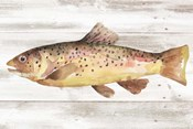 Spotted Trout I