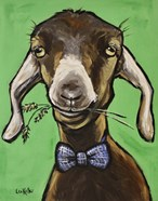 Goat 'Billy The Kid'