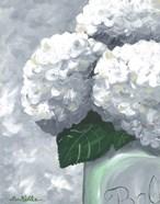 Hydrangea Grannies Garden 2