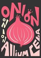 Kitchen Onion