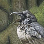 Raven Earth