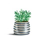 Striped Succulent