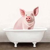 Pig in Bathtub Solo