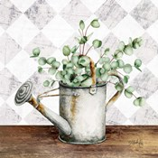 Eucalyptus White Watering Can