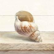 Driftwood Shell I