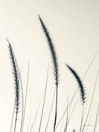 Field Grasses IV