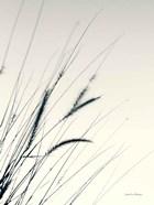 Field Grasses I