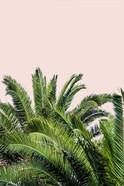 Tropical Leaves on Blush II
