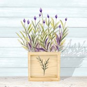 Lavender and Wood Square II