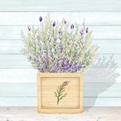 Lavender and Wood Square III