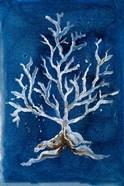 White Corals II