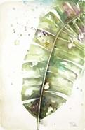 Watercolor Plantain Leaves II
