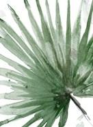 Palma Verde Close Up