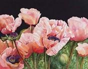 Breckenridge Poppies