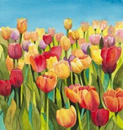 Tulips in Blue Sky