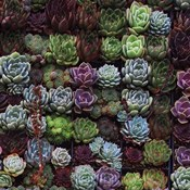 A Gathering Of Succulents 1
