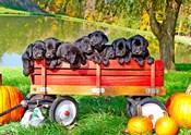 8 Lab Puppies