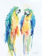 Colorful Parrots I