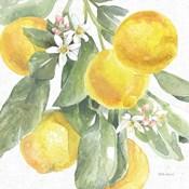 Citrus Charm Lemons II
