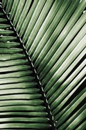 Palm Frond I Green