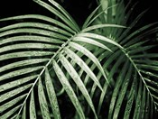 Palm Fronds Green