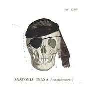 Dandy Bones VI Pirate