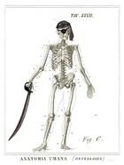 Dandy Bones Pirate